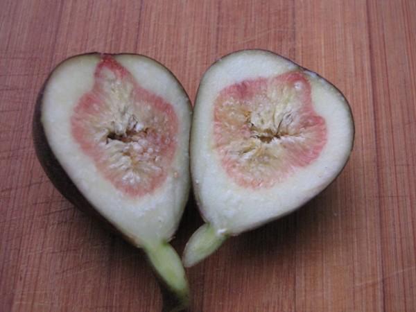 Ficus carica 'Madeleine de deux Saison'